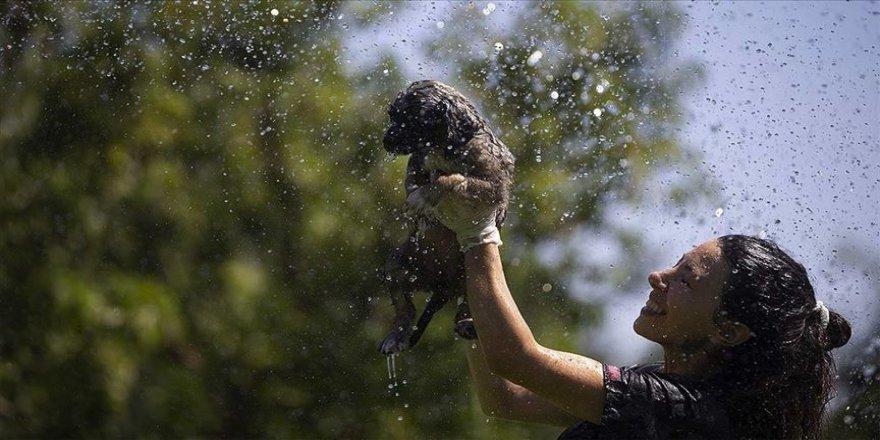 Sıcaklık stresine giren hayvanlara 'sulu' çözüm