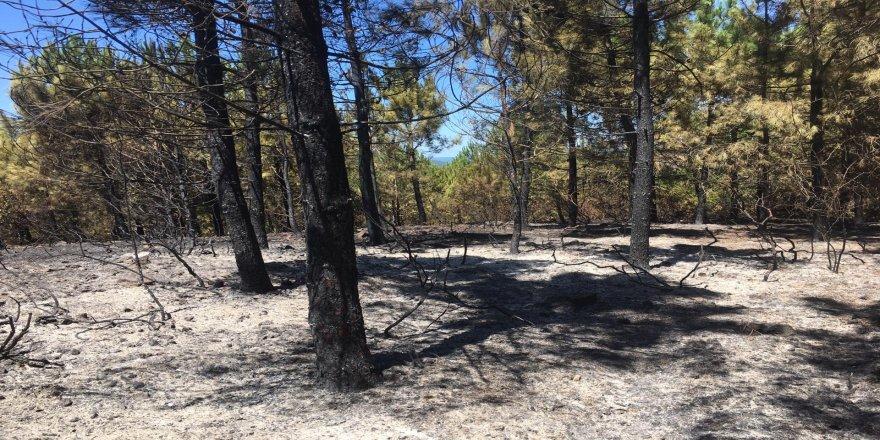 Gebze'de orman yangını ! Yirmi dönümlük alan küle döndü