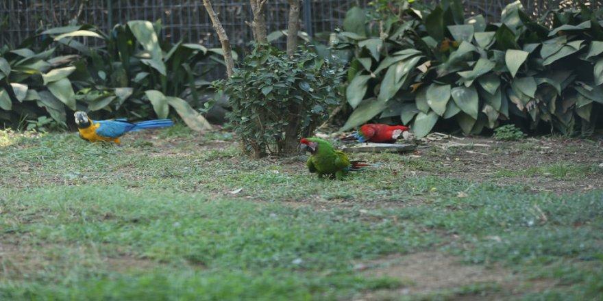 Darıca hayvanat bahçesi yüzlerce kuşa 'yuva' oldu