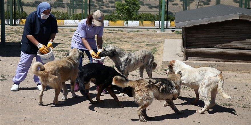 Köpek barınağının gönüllü anneleri