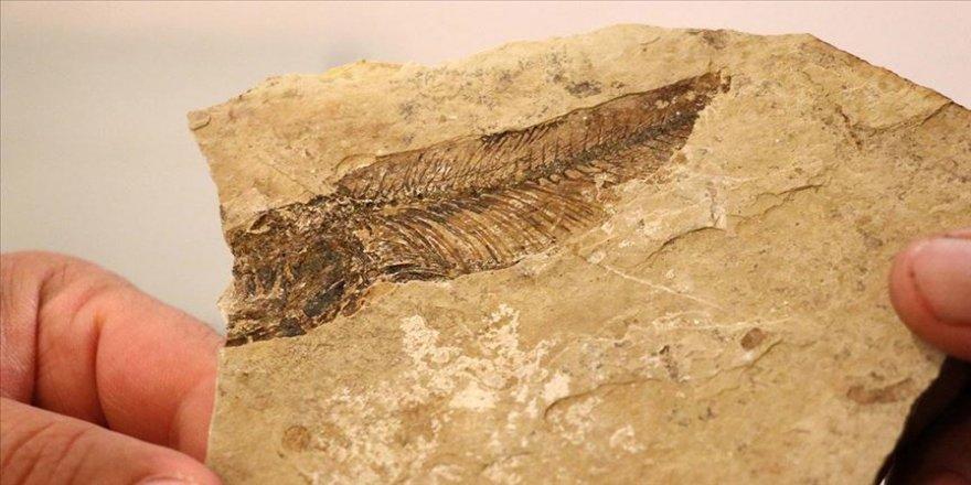 Bolu'daki fosil ormanda 19 milyon yıl öncesine yolculuk