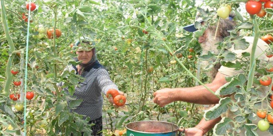 Çevresindekilere inat organik tarım yapan çiftin başarısı örnek oldu
