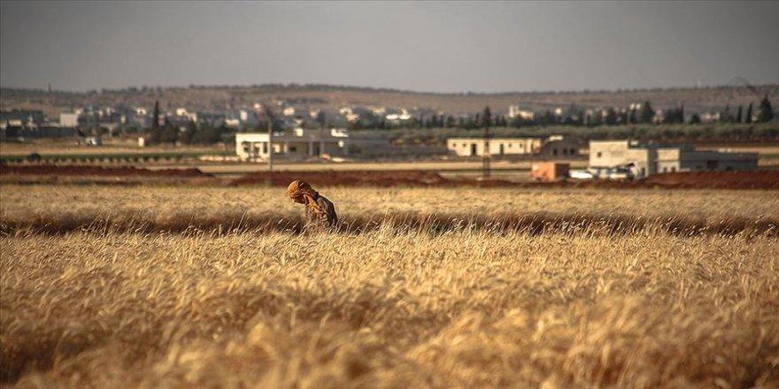 Esed rejimi zorunlu askerliği reddeden 100 kişiyi mayın tarlasına sürdü: 8 ölü, 15 yaralı