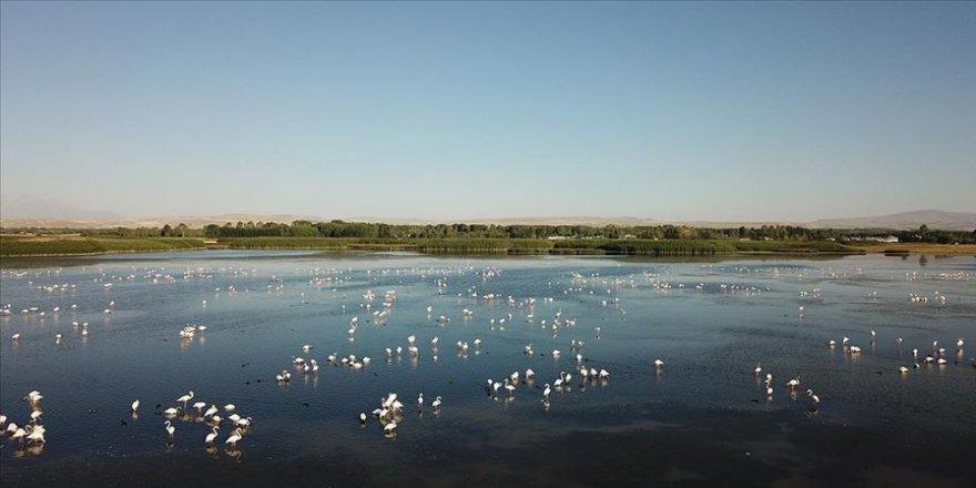 Van'da flamingoların konakladığı alanlar turizme kazandırılacak