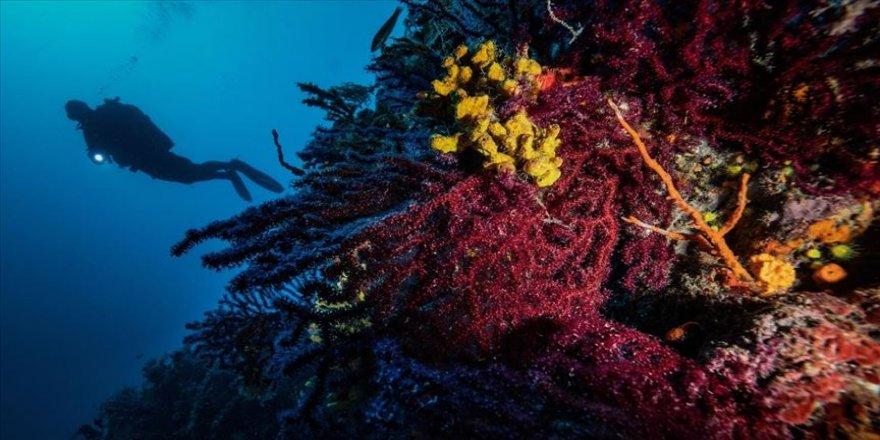 Kırmızı Mercanların derinlerdeki evi 'Ayvalık'
