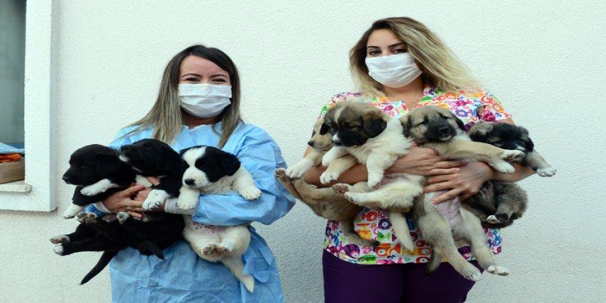'Pamuk' ve yavruları 'koronavirüs savaşçıları'nın maskotu oldu