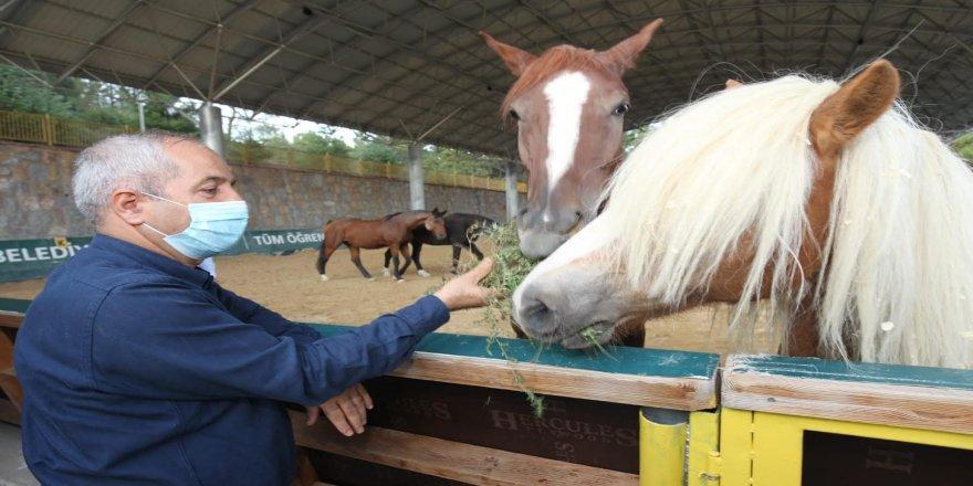 Atlı Eğitim Merkezi'nde ücretsiz eğitimler devam ediyor