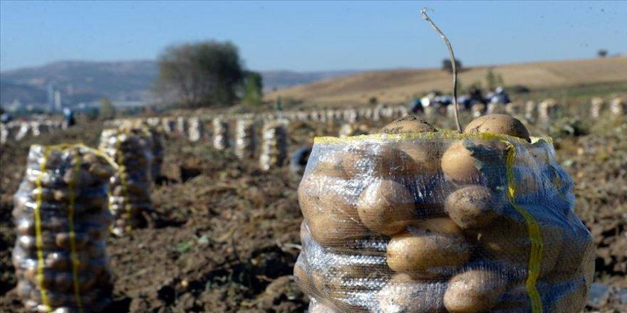 Devlet destekledi ilçede patates üretimi arttı