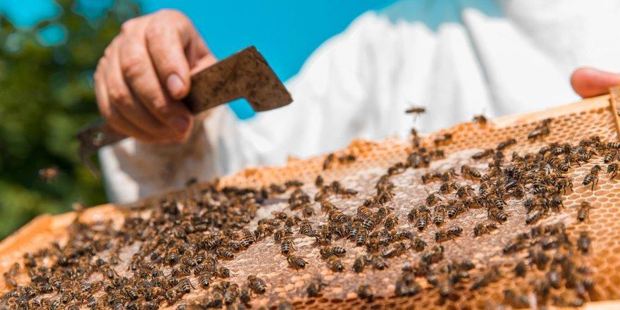 Bu sene arı ürünlerinin fiyatı yükselecek