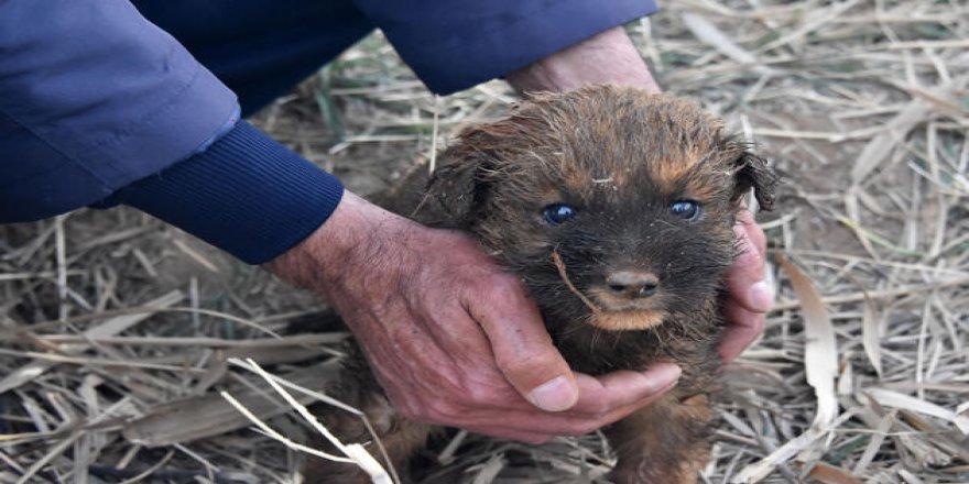 Gebze'de kuyuya düşen köpeğin imdadına itfaiye yetişti