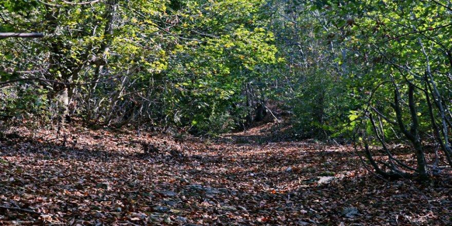 Amanos Dağları sonbahar renkleriyle büyülüyor