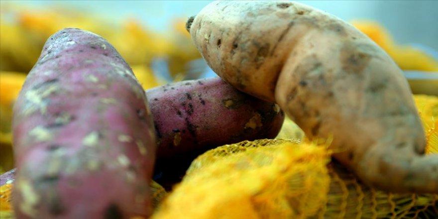 'Tatlı patates' üretimi yaygınlaşacak