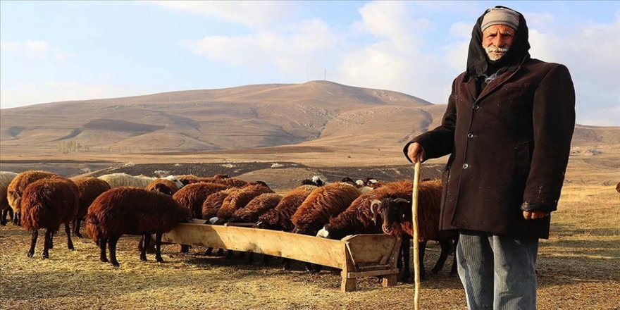 Yılın yarısını koyunlarıyla kırsalda yalnız geçiriyor