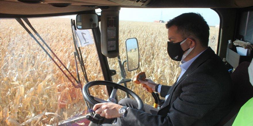 Tarım ve Orman Bakanı Bekir Pakdemirli mısır hasadı ve buğday ekimi yaptı
