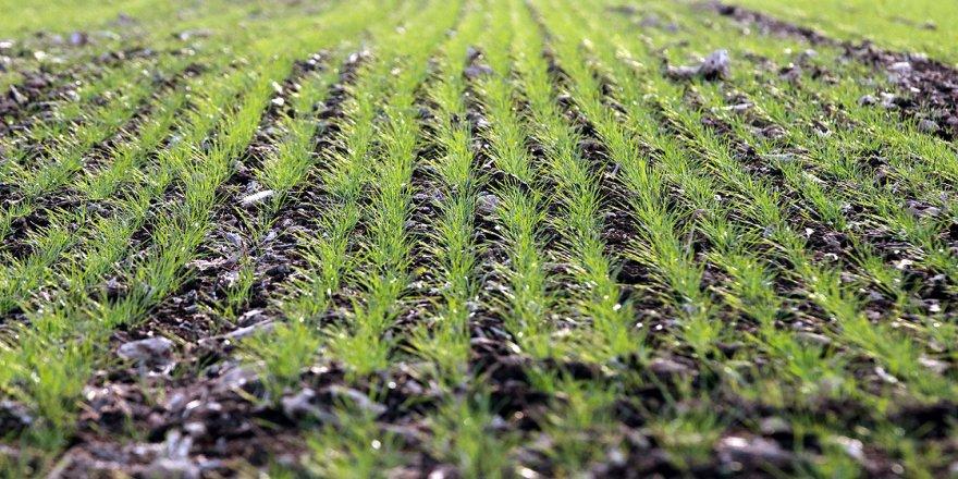 Trakya'nın verimli toprakları çiftçinin yüzünü güldürüyor