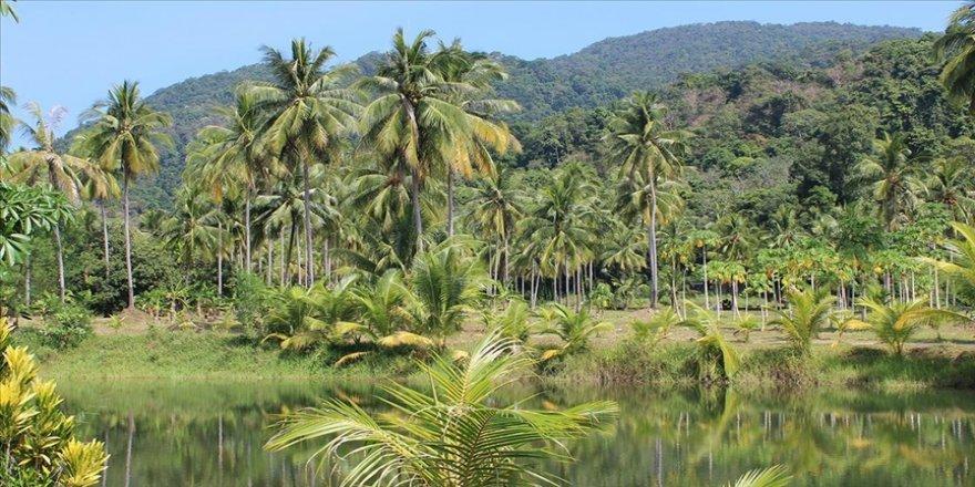 Japonya ile Brezilya arasında Amazon ormanlarındaki biyoçeşitliliğin korunmasını kapsayan mutabakat muhtırası imzalandı.