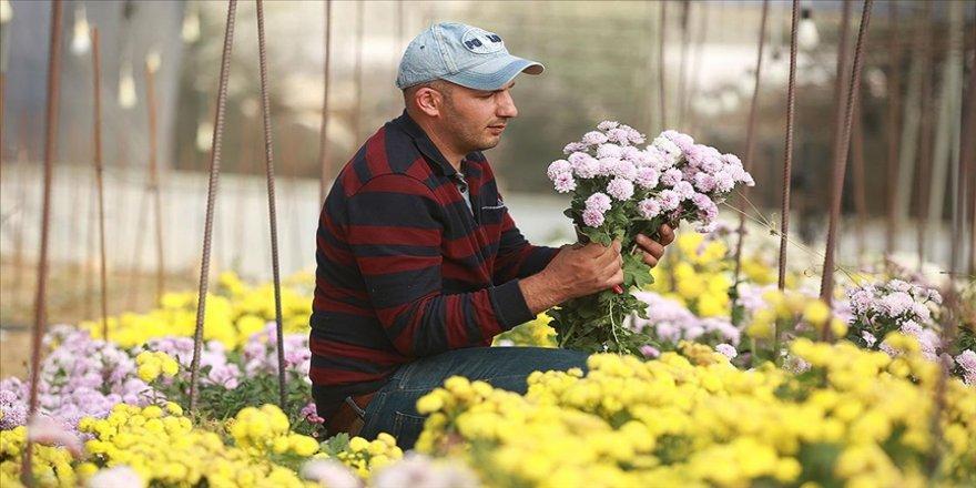 Filistinli Mümin nadir çiçek türleri üreterek İsrail'in tekeliyle mücadele ediyor