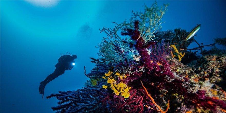 Ayvalık'ın deniz çayırlarının korunması için BM destekli proje başlatıldı