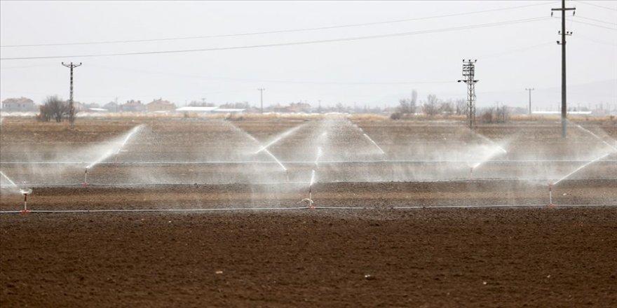 Türkiye'nin 'tahıl ambarında' kuraklık nedeniyle çiftçiler sulamaya kış ortasında başladı