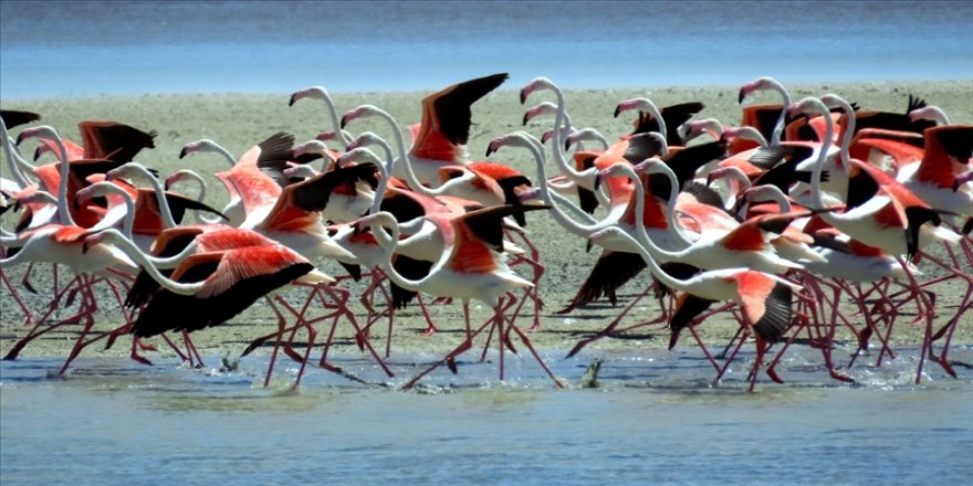 Seyfe Gölü'nü 14 yıldır takvimlerle tanıtıyor