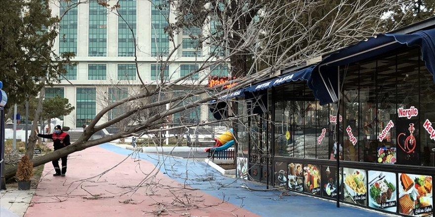 Kırıkkale, Kayseri, Kırşehir ile Niğde'de fırtına nedeniyle ağaçlar devrildi