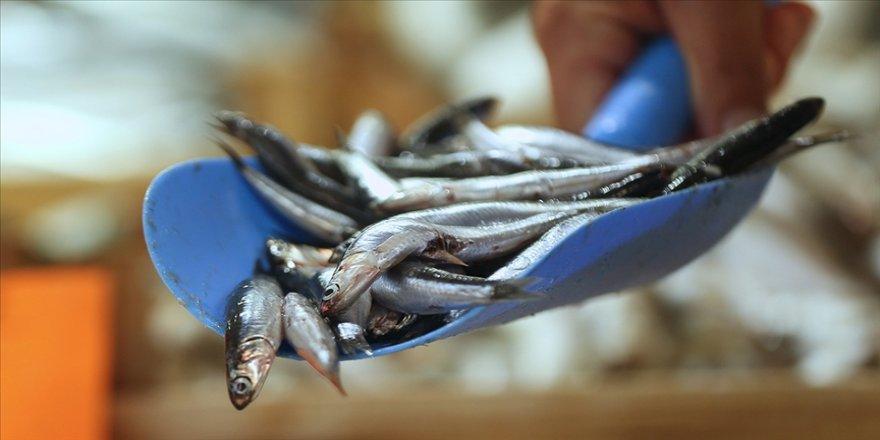 Hamsi avcılığı için kısmi durdurma kararı 28 Ocak'a kadar uzatıldı