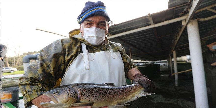 Kırmızı benekli alabalığın neslinin devamı 'akuakültür' yoluyla sağlanıyor