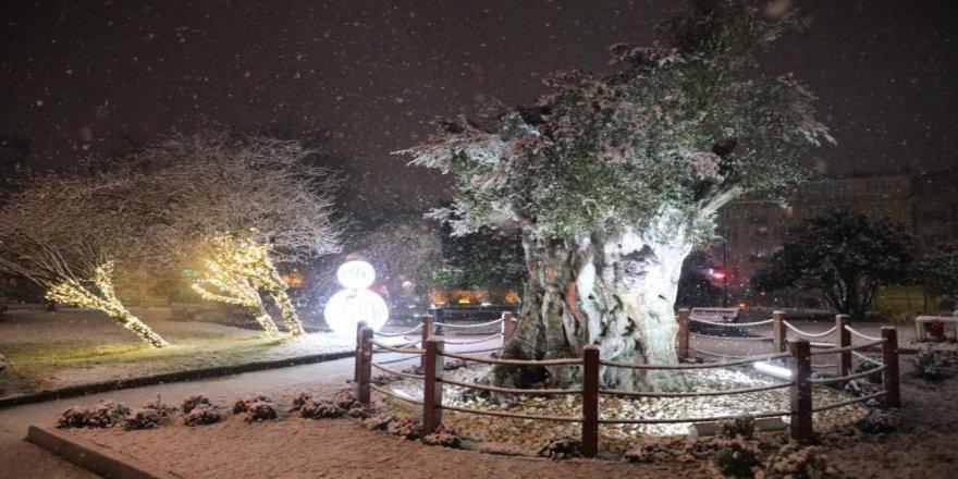 600 yıllık zeytin ağacından kar manzarası