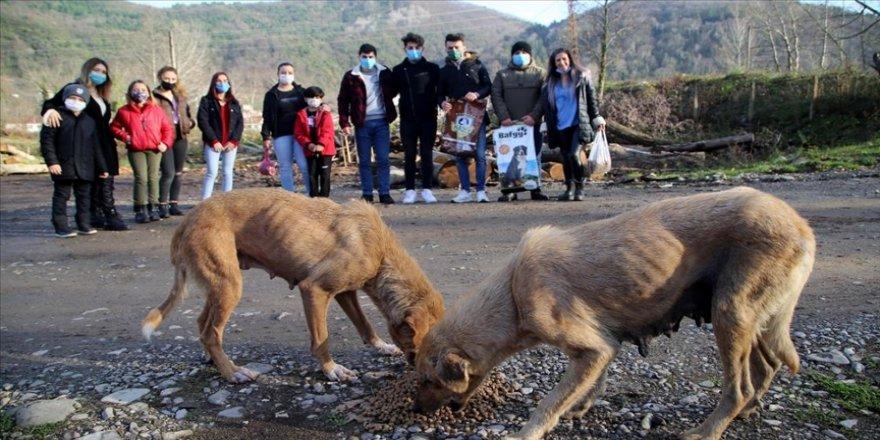 Kovid-19 nedeniyle köylerinde kalan gençler çevre temizliği yapıyor, sokak hayvanlarına bakıyor