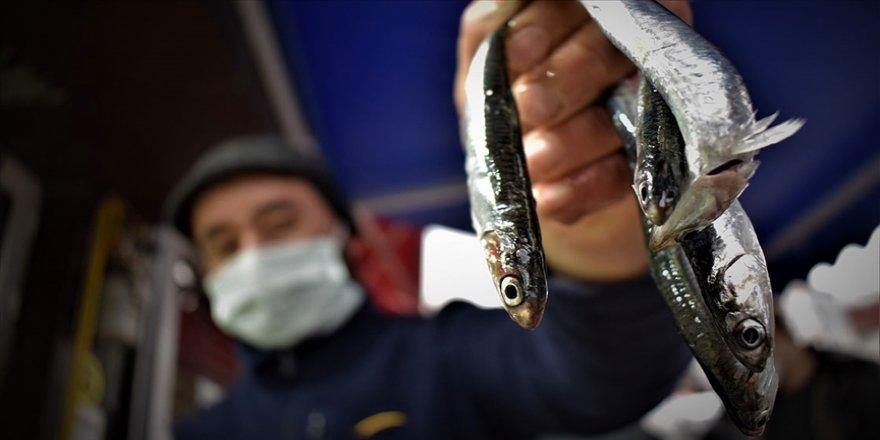 Hamsi avcılığı için kısmi durdurma kararı 7 Şubat'a kadar uzatıldı