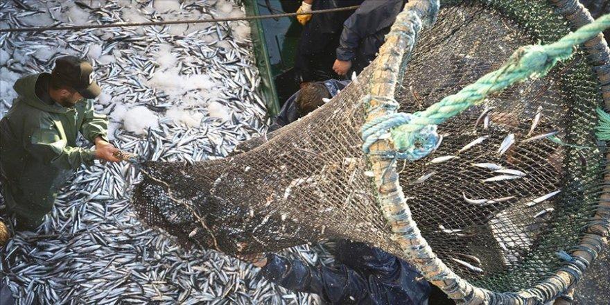 Ege Bölgesi'nden geçen yıl 741 milyon dolarlık balık ihraç edildi