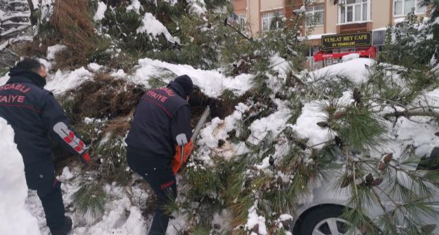 Park halindeki aracın üzerine ağaç devrildi