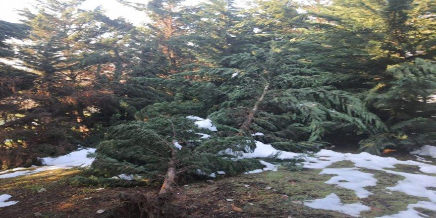 Kardan zarar gören ağaçlar budanıyor