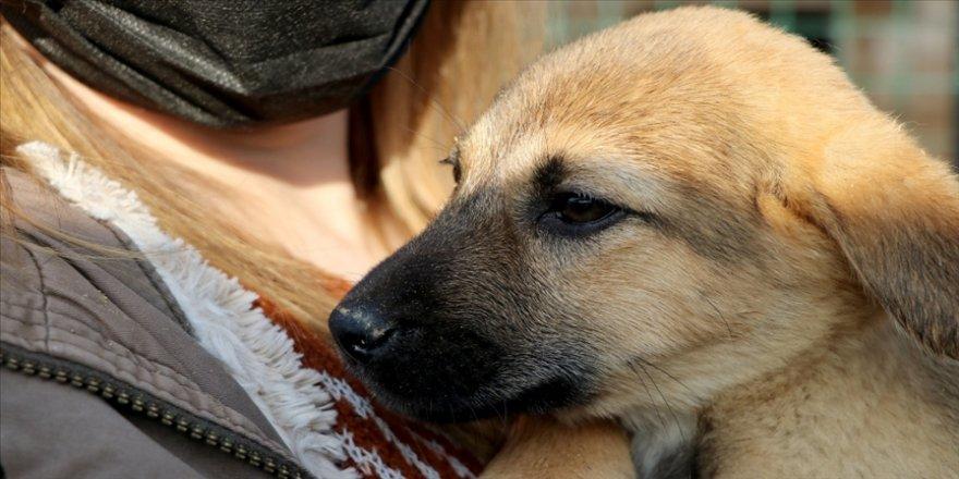 Edirne'de barınakta yaşayan 'Paspas' adlı köpeği Gülben Ergen sahiplendi
