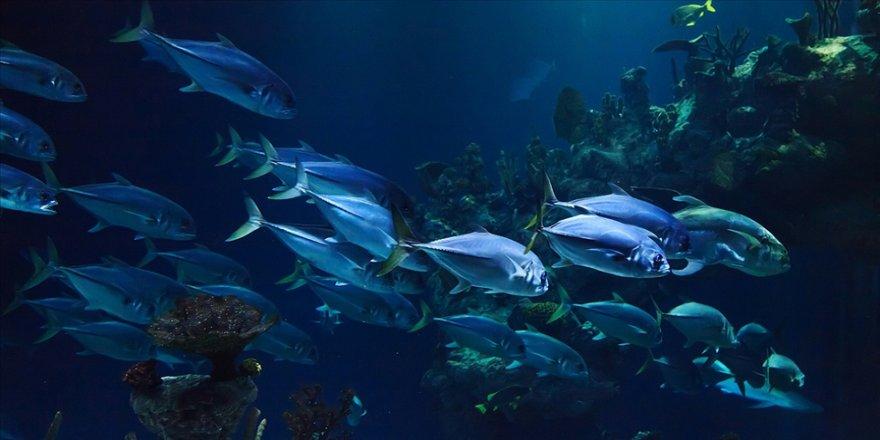 Dünyada 1 milyon hayvan ve bitki türünün nesli tükenme tehdidi altında