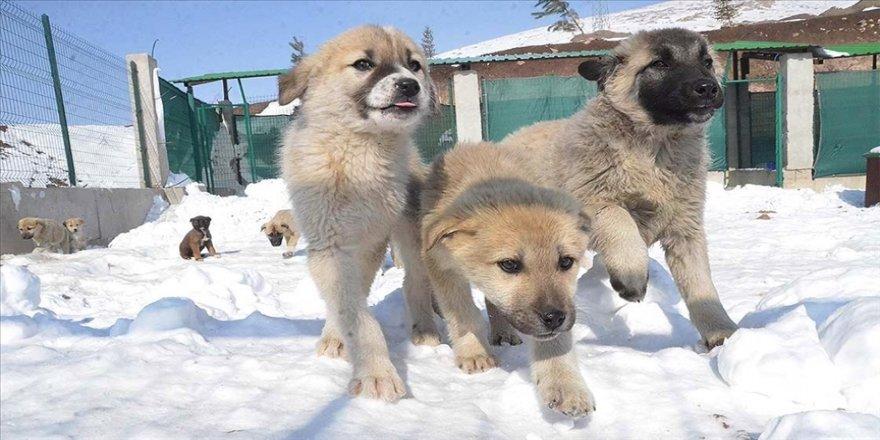 Yüksekova'ya yapılan hayvan barınağı 'can dostlar' için sıcak yuva oldu