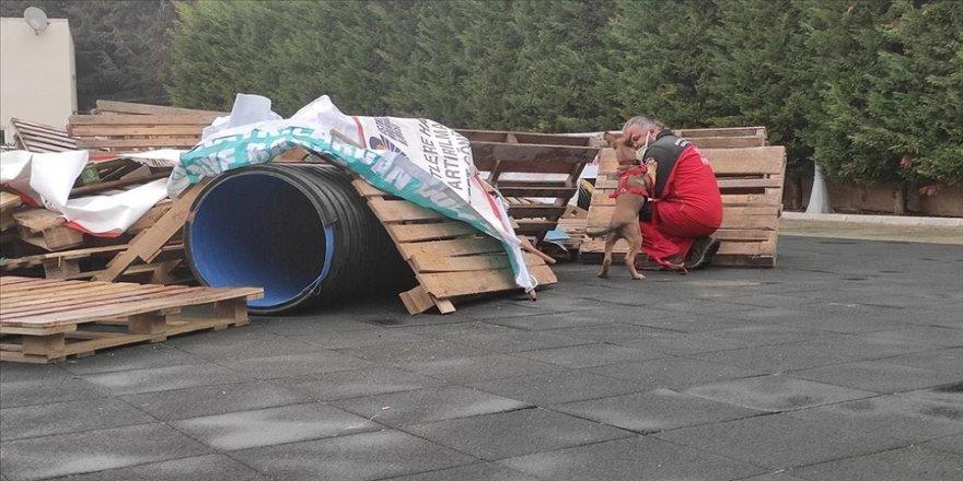 Bahçelievler'de arama kurtarma köpekleriyle deprem tatbikatı yapıldı