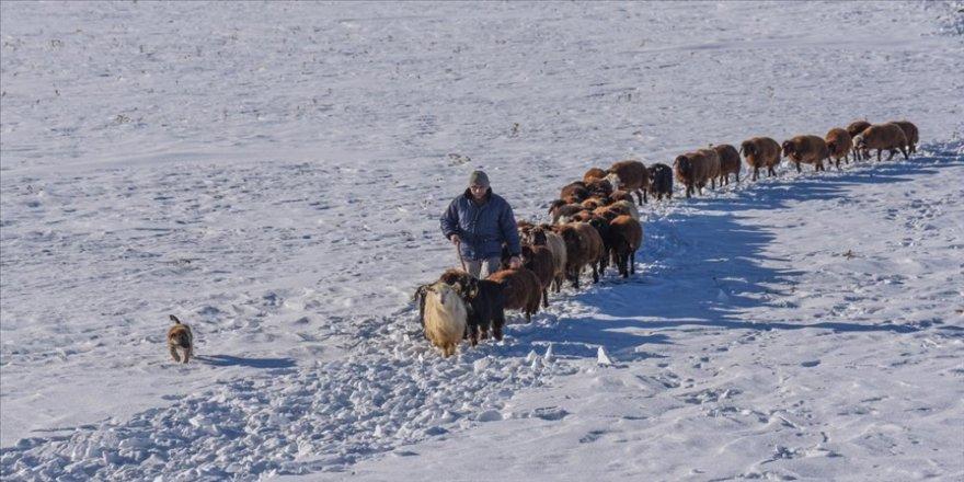 Karslı besicilerin zorlu kış şartlarıyla mücadelesi sürüyor