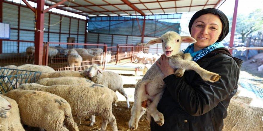 Devlet desteğiyle çiftlik kuran kadın girişimci, kuzularını 'anne şefkatiyle' büyütüyor