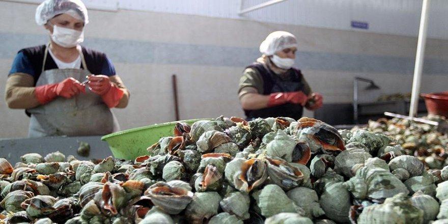 Türkiye'den yılın ilk iki ayında 2,7 milyon dolarlık deniz salyangozu ihraç edildi