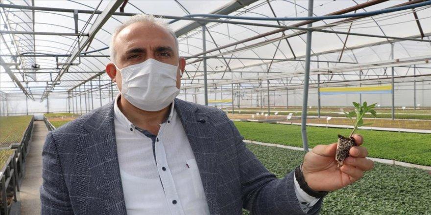 Amasyalı girişimci yılda 25 milyon fide üretilen tesise devlet desteğiyle kavuştu