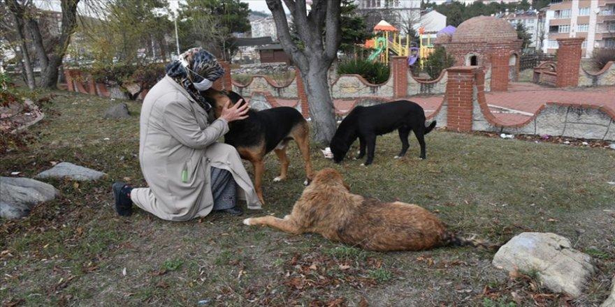 Yaşadıkları yerde sokak hayvanlarını besleyen hayvansever çift örnek oluyor