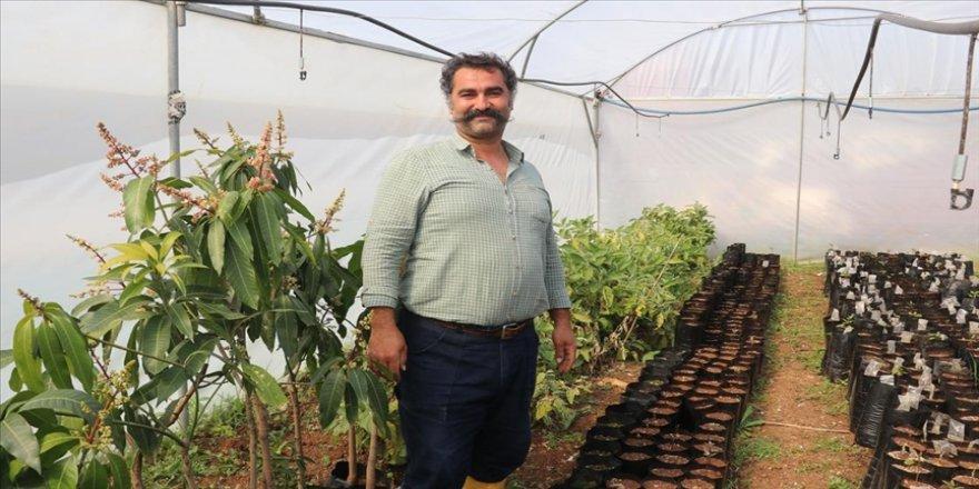 Otomasyon şirketini kapatıp bahçe kuran girişimci avokado fidanı yetiştiriyor