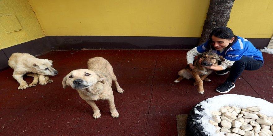 HAYTAP, belediyelerden hayvanlar için rehabilitasyon ve kısırlaştırma merkezleri istiyor