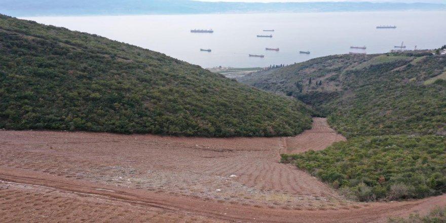 Dolgu alanına 10 bin 500 ağaç dikildi