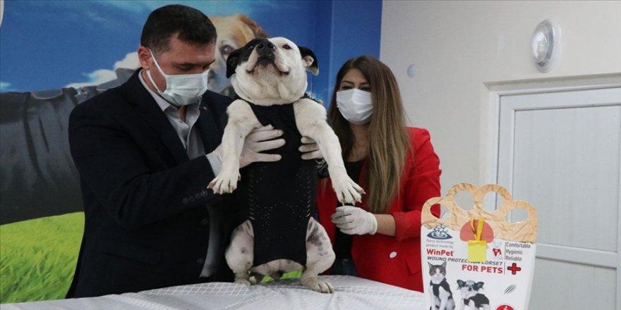 Niğdeli veteriner hekim kedi ve köpekleri 'Elizabeth yakası'ndan kurtaracak korseyle yurt dışına açıldı
