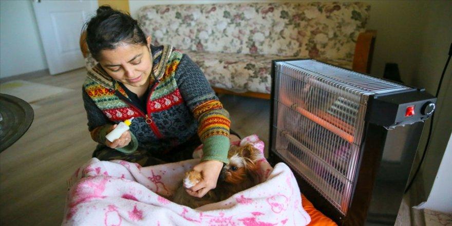 Ülkü öğretmen birlikte yaşadığı 7 köpek ve 11 kedi için 'Laborant ve Veteriner Sağlık Programı'nı bitirdi