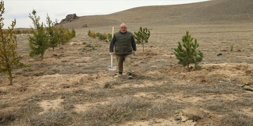 Köyünde orman oluşturmak için 7 yılda yaklaşık 10 bin fidan dikti