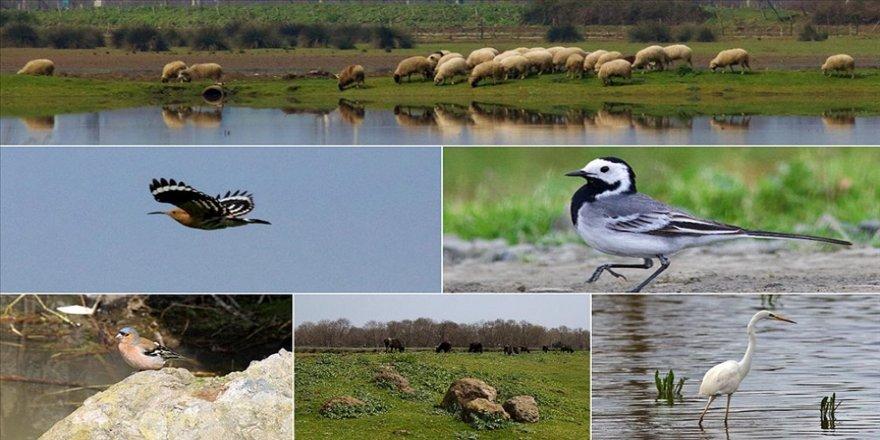 Kızılırmak Kuş Cenneti baharla birlikte hareketlendi