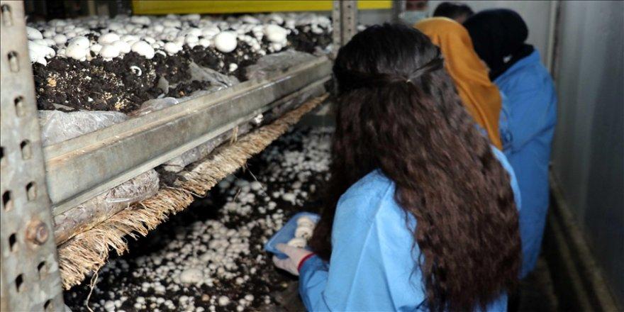 """Karabük'te gençler mesleki eğitim kursuyla """"altın bilezik"""" sahibi oluyor"""